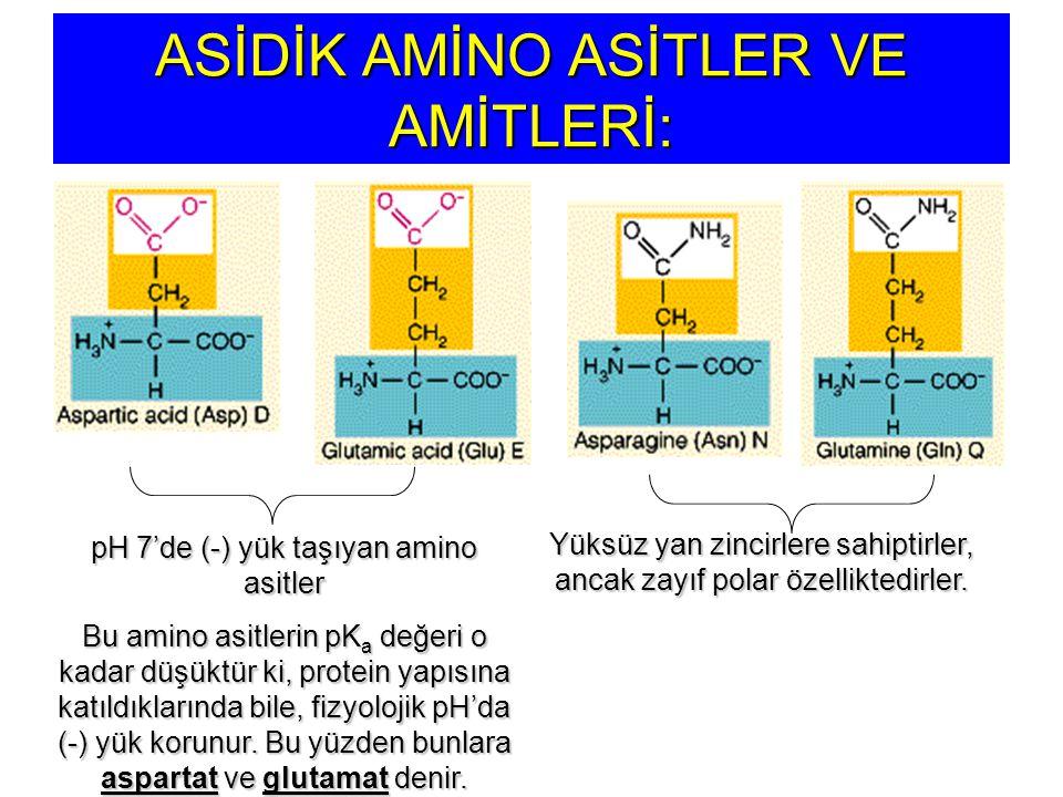 ASİDİK AMİNO ASİTLER VE AMİTLERİ: pH 7'de (-) yük taşıyan amino asitler Bu amino asitlerin pK a değeri o kadar düşüktür ki, protein yapısına katıldıkl
