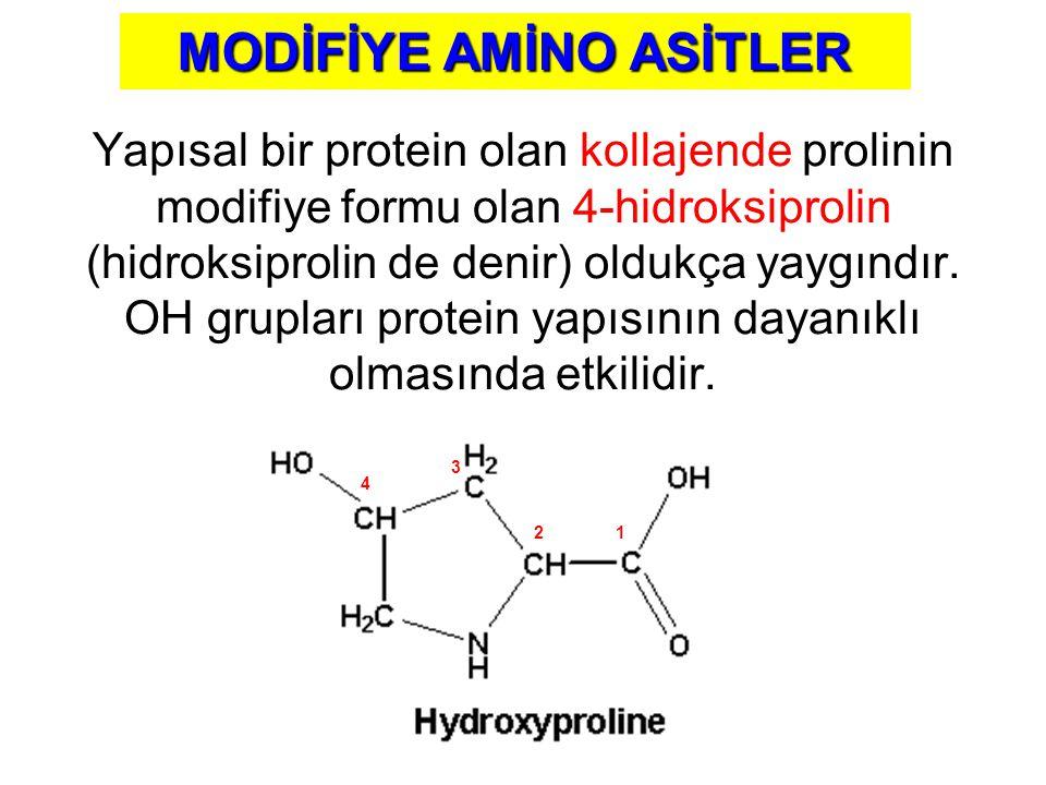Yapısal bir protein olan kollajende prolinin modifiye formu olan 4-hidroksiprolin (hidroksiprolin de denir) oldukça yaygındır. OH grupları protein yap