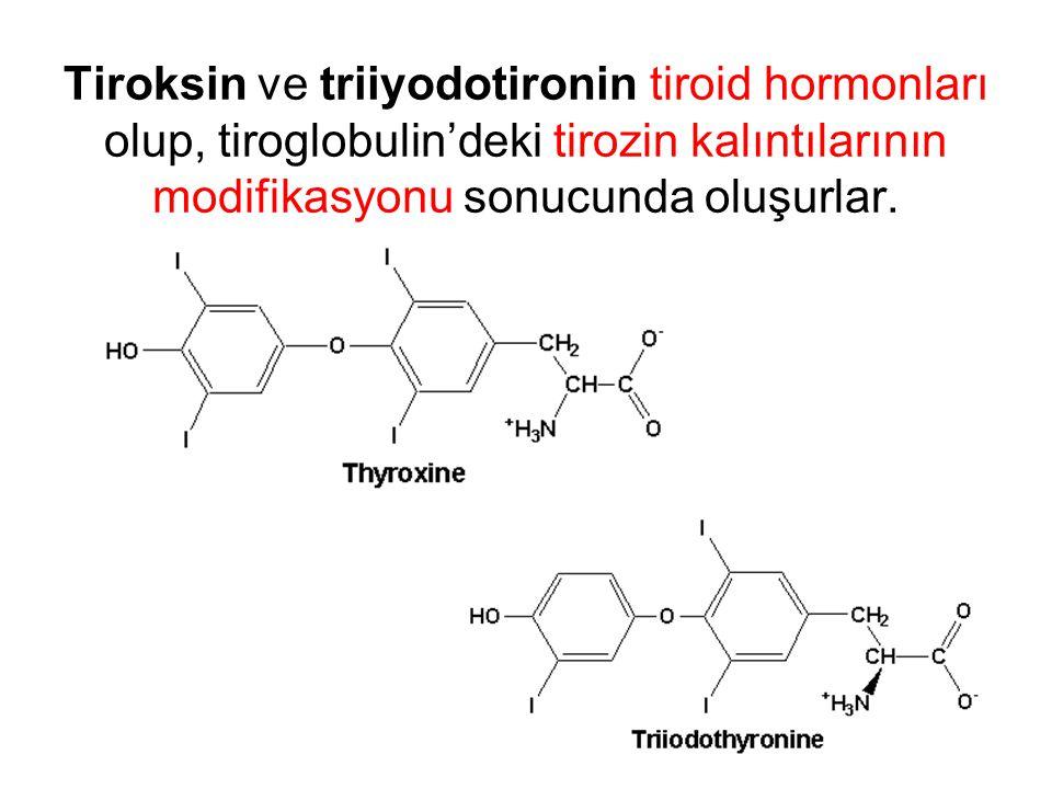 Tiroksin ve triiyodotironin tiroid hormonları olup, tiroglobulin'deki tirozin kalıntılarının modifikasyonu sonucunda oluşurlar.