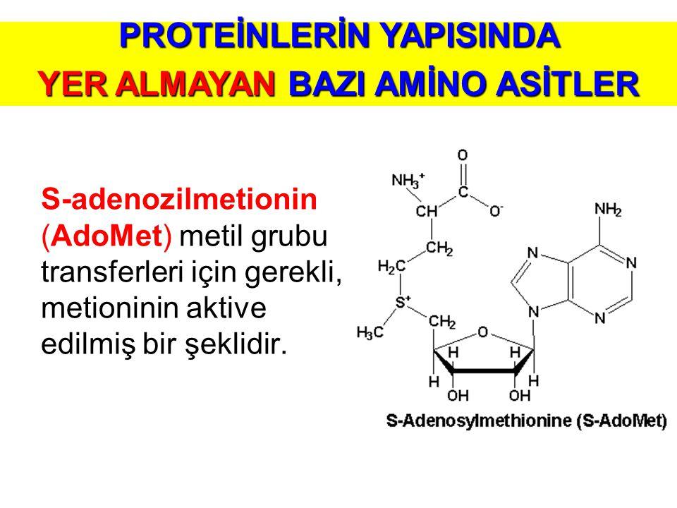 S-adenozilmetionin (AdoMet) metil grubu transferleri için gerekli, metioninin aktive edilmiş bir şeklidir. PROTEİNLERİN YAPISINDA YER ALMAYAN BAZI AMİ
