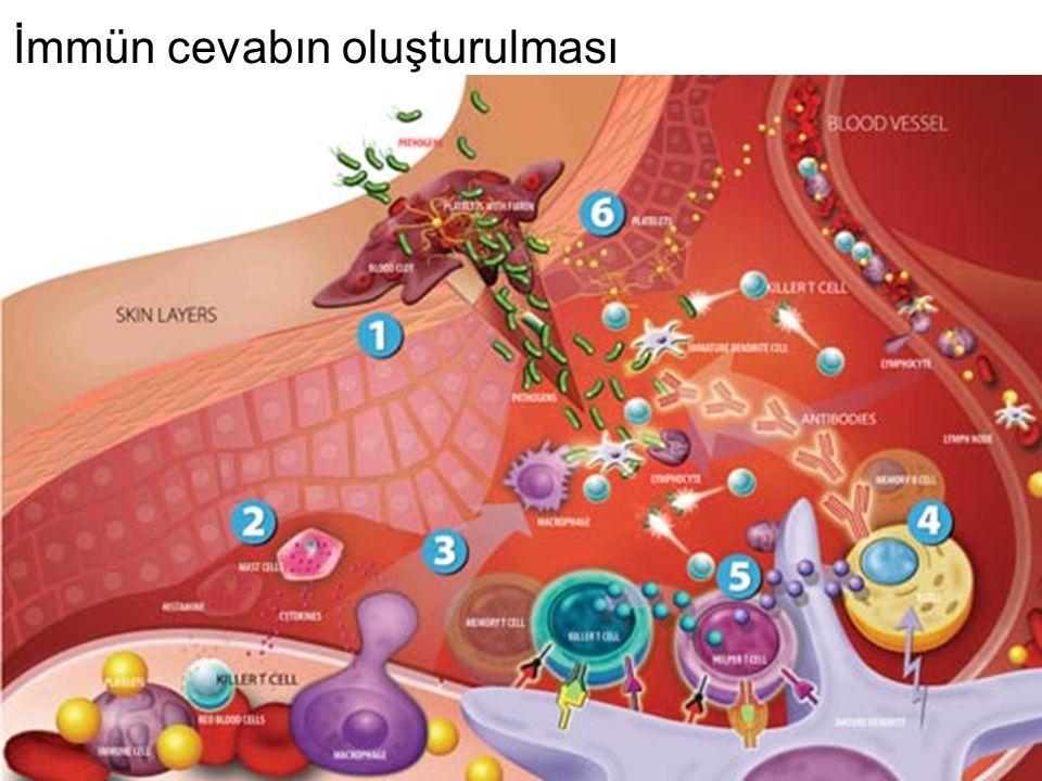 Bunun dışında kalan durumlar: Bazı küçük siklik oligopeptitlerde N-ucu ile C-ucu birbirine bağlanmıştır.