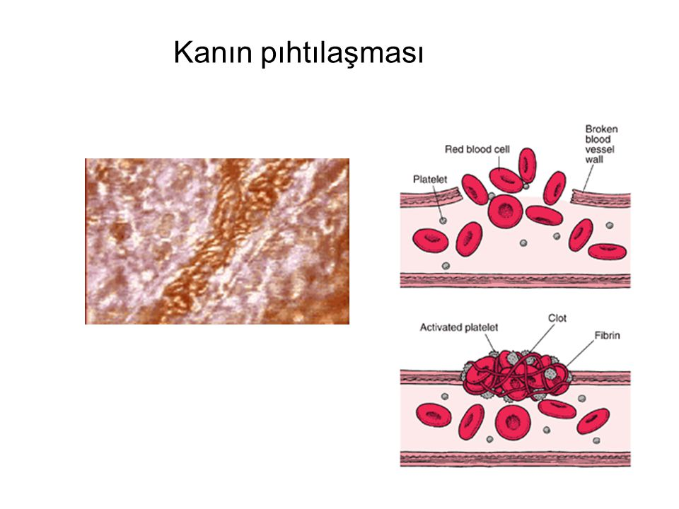 Bazı amino asitler proteinlerin yapısına katıldıktan sonra modifiye edilirler.