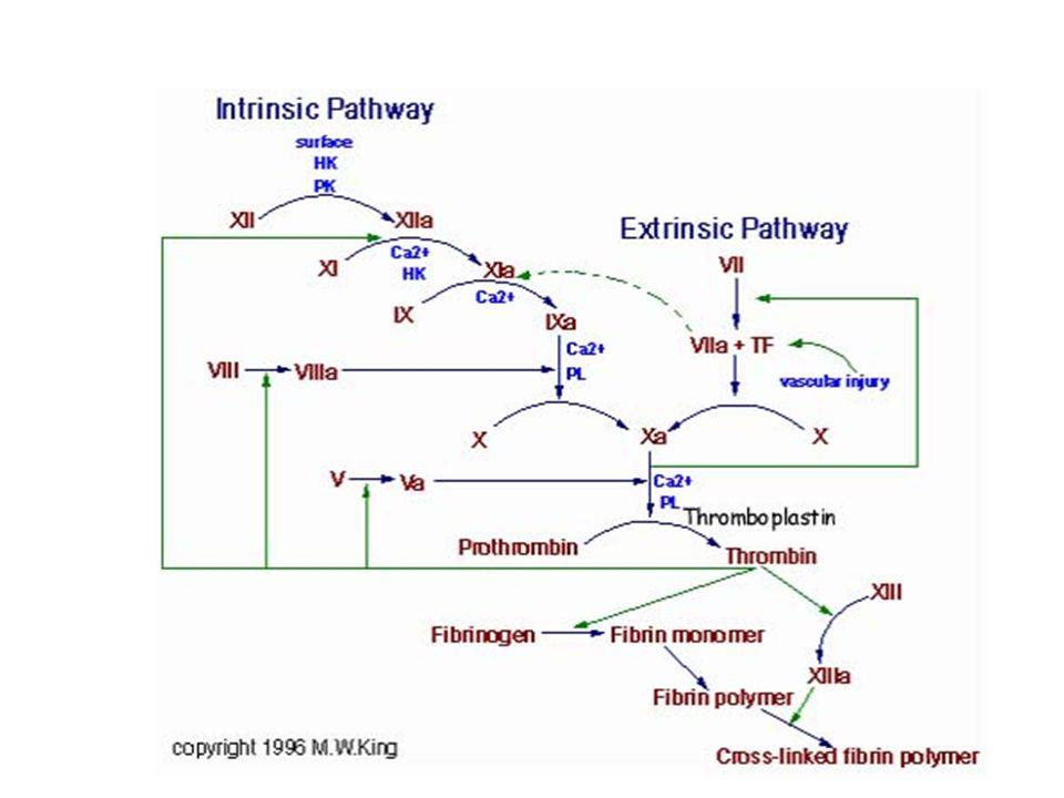 Grampozitif bir bakteride yer alan peptidoglikan tabakası (D-amino asitler içerir.) Örneğin, D-Glutamik asit Bakteriyi peptidazların saldırısına karşı koruyabilir.