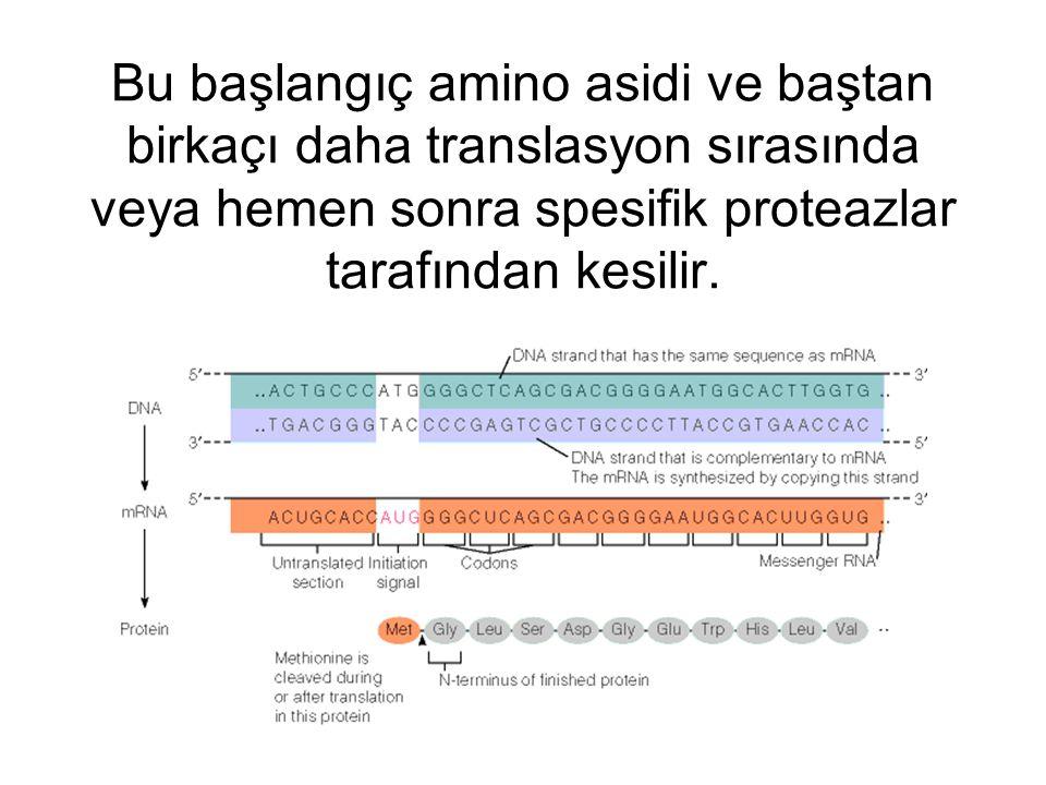Bu başlangıç amino asidi ve baştan birkaçı daha translasyon sırasında veya hemen sonra spesifik proteazlar tarafından kesilir.
