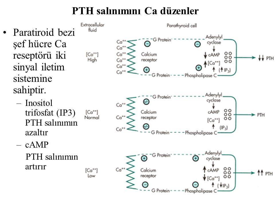 PTH salınımını Ca düzenler Paratiroid bezi şef hücre Ca reseptörü iki sinyal iletim sistemine sahiptir. –Inositol trifosfat (IP3) PTH salınımını azalt