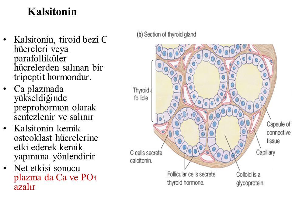 Kalsitonin Kalsitonin, tiroid bezi C hücreleri veya parafolliküler hücrelerden salınan bir tripeptit hormondur. Ca plazmada yükseldiğinde preprohormon