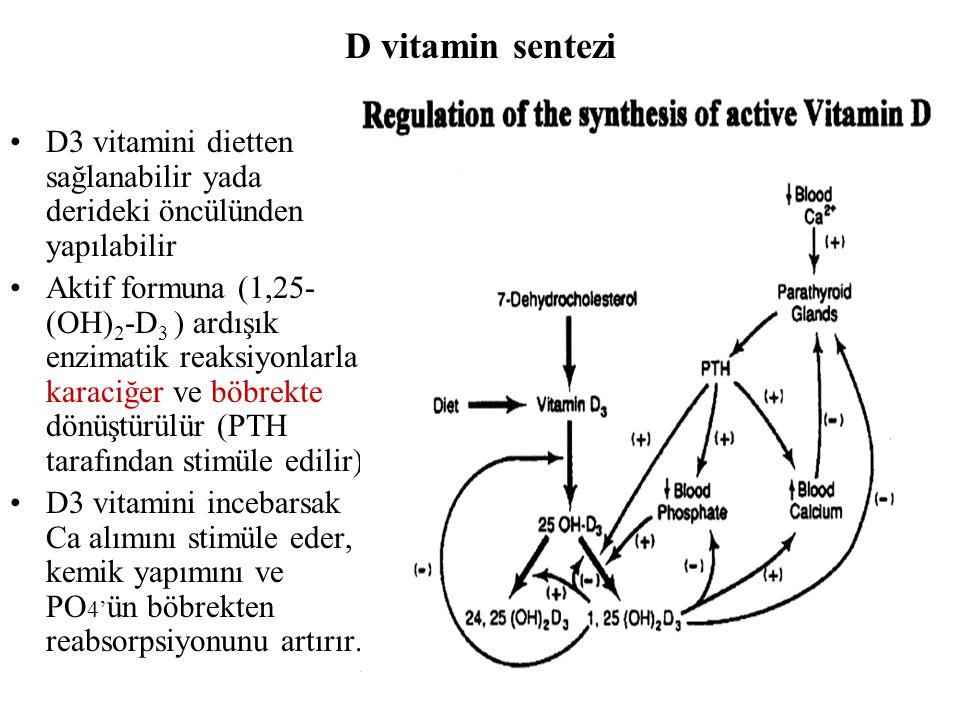 D vitamin sentezi D3 vitamini dietten sağlanabilir yada derideki öncülünden yapılabilir Aktif formuna (1,25- (OH) 2 -D 3 ) ardışık enzimatik reaksiyon