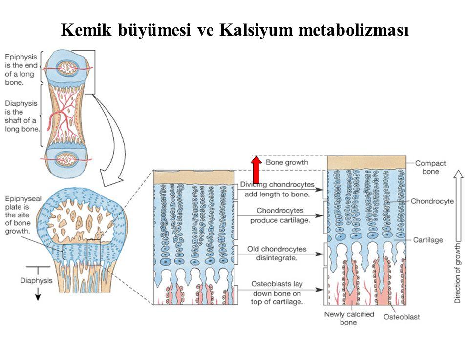 Kemik büyümesi ve Kalsiyum metabolizması