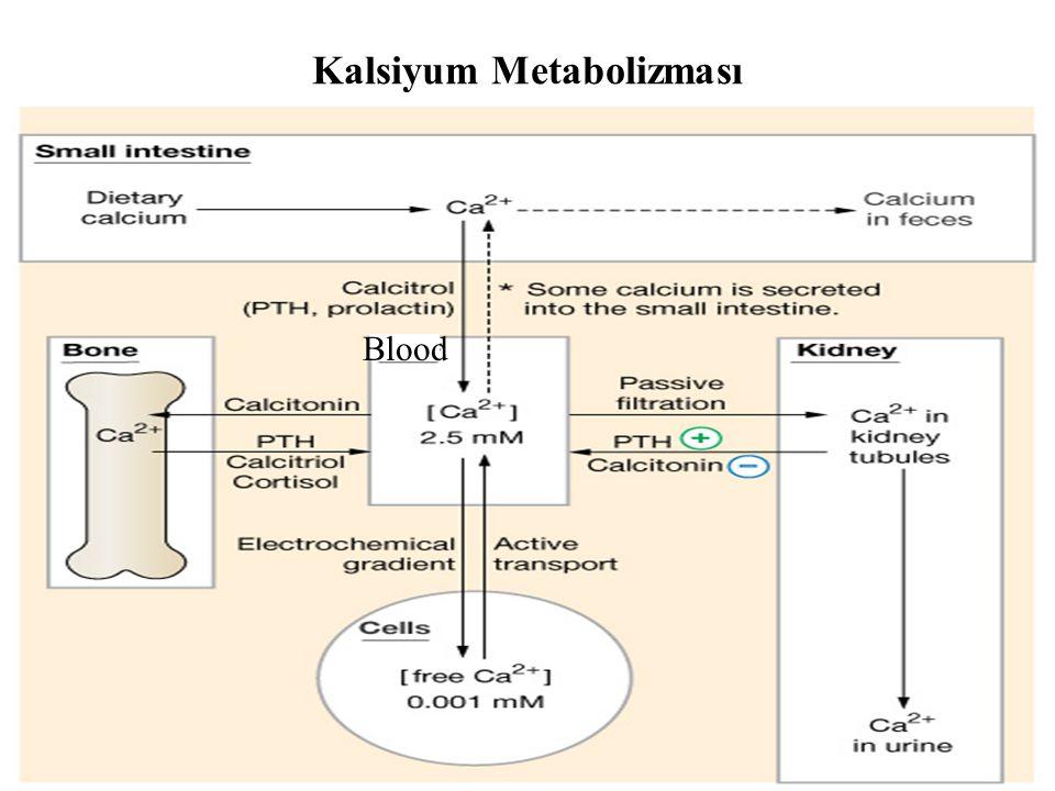 Kalsiyum Metabolizması Blood