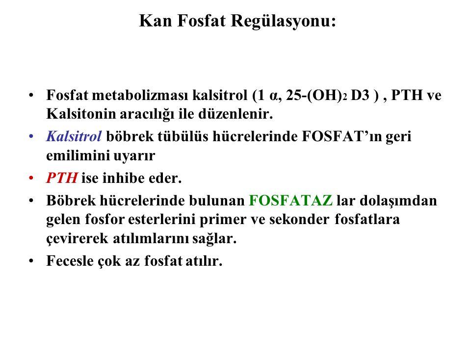 Kan Fosfat Regülasyonu: Fosfat metabolizması kalsitrol (1 α, 25-(OH) 2 D3 ), PTH ve Kalsitonin aracılığı ile düzenlenir. Kalsitrol böbrek tübülüs hücr