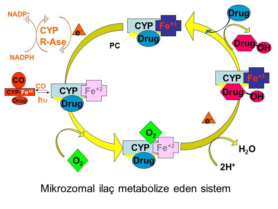 Mikrozomal ilaç metabolize eden sistem CO hh CYP-Fe +2 Drug CO O2O2 e-e- e-e- 2H + H2OH2O Drug CYP R-Ase NADPH NADP + OH Drug CYP Fe +3 PC Drug CYP