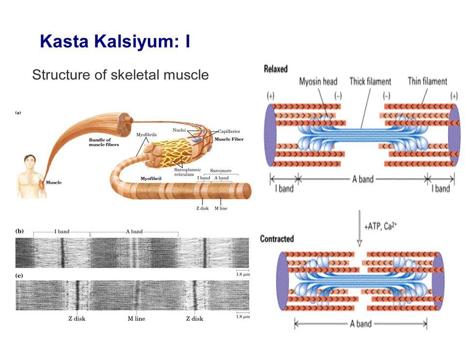 Kasta Kalsiyum: I