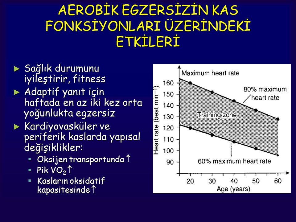 AEROBİK EGZERSİZİN KAS FONKSİYONLARI ÜZERİNDEKİ ETKİLERİ ► Sağlık durumunu iyileştirir, fitness ► Adaptif yanıt için haftada en az iki kez orta yoğunl