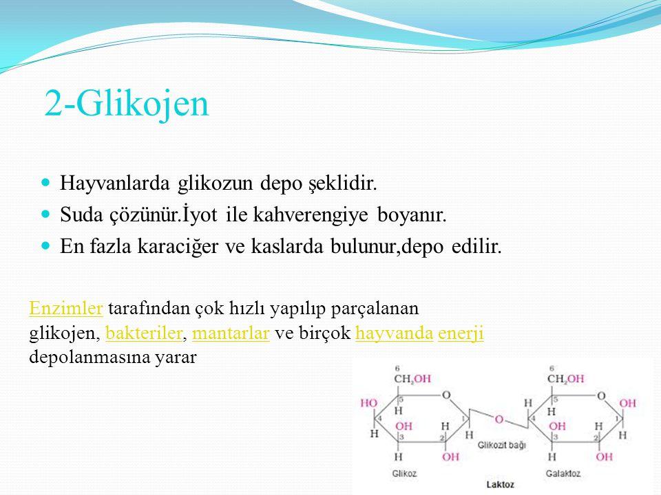 2-Glikojen Hayvanlarda glikozun depo şeklidir. Suda çözünür.İyot ile kahverengiye boyanır. En fazla karaciğer ve kaslarda bulunur,depo edilir. Enzimle