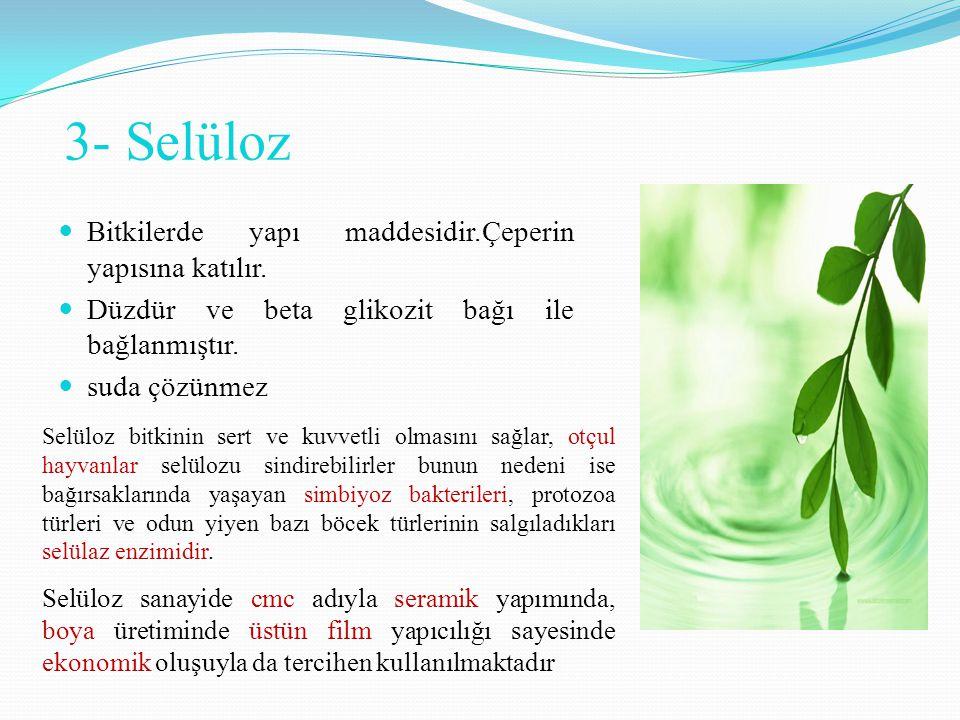 3- Selüloz Bitkilerde yapı maddesidir.Çeperin yapısına katılır. Düzdür ve beta glikozit bağı ile bağlanmıştır. suda çözünmez Selüloz bitkinin sert ve