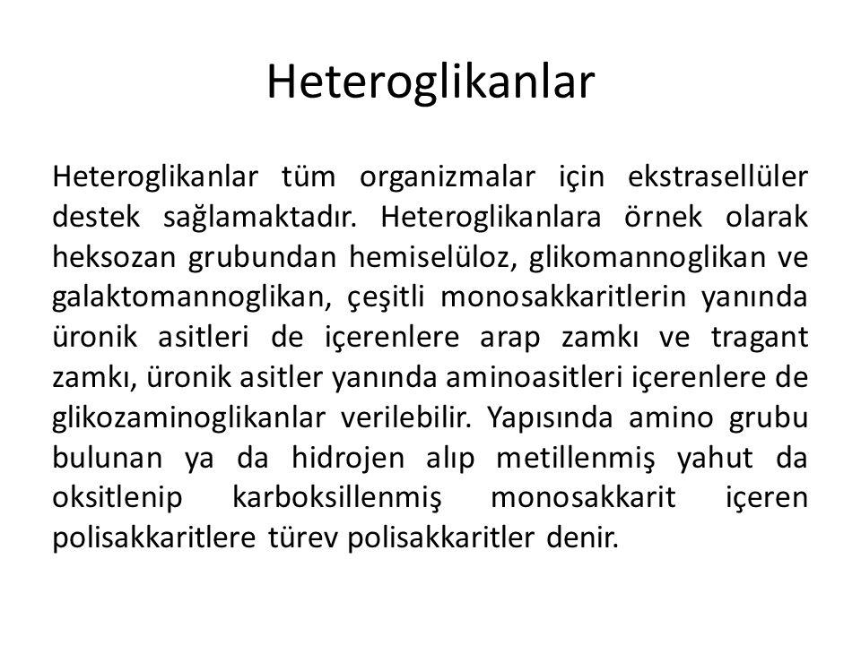 Heteroglikanlar Heteroglikanlar tüm organizmalar için ekstrasellüler destek sağlamaktadır. Heteroglikanlara örnek olarak heksozan grubundan hemiselülo