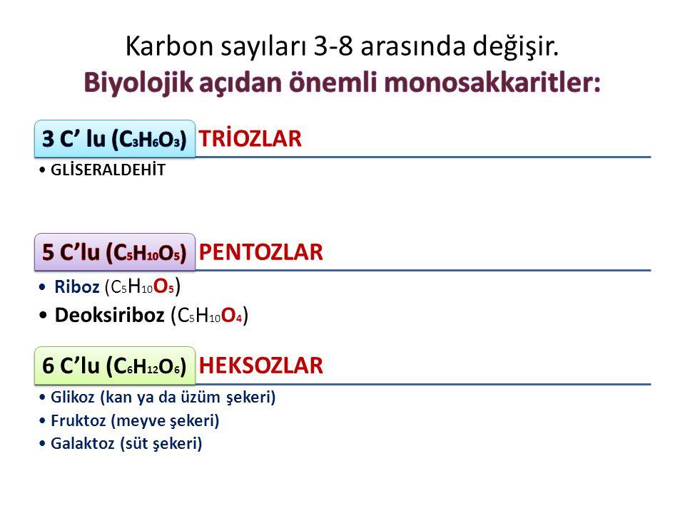 TRİOZLAR GLİSERALDEHİT PENTOZLAR Riboz (C 5 H 10 O 5 ) Deoksiriboz (C 5 H 10 O 4 ) HEKSOZLAR 6 C'lu (C 6 H 12 O 6 ) Glikoz (kan ya da üzüm şekeri) Fru