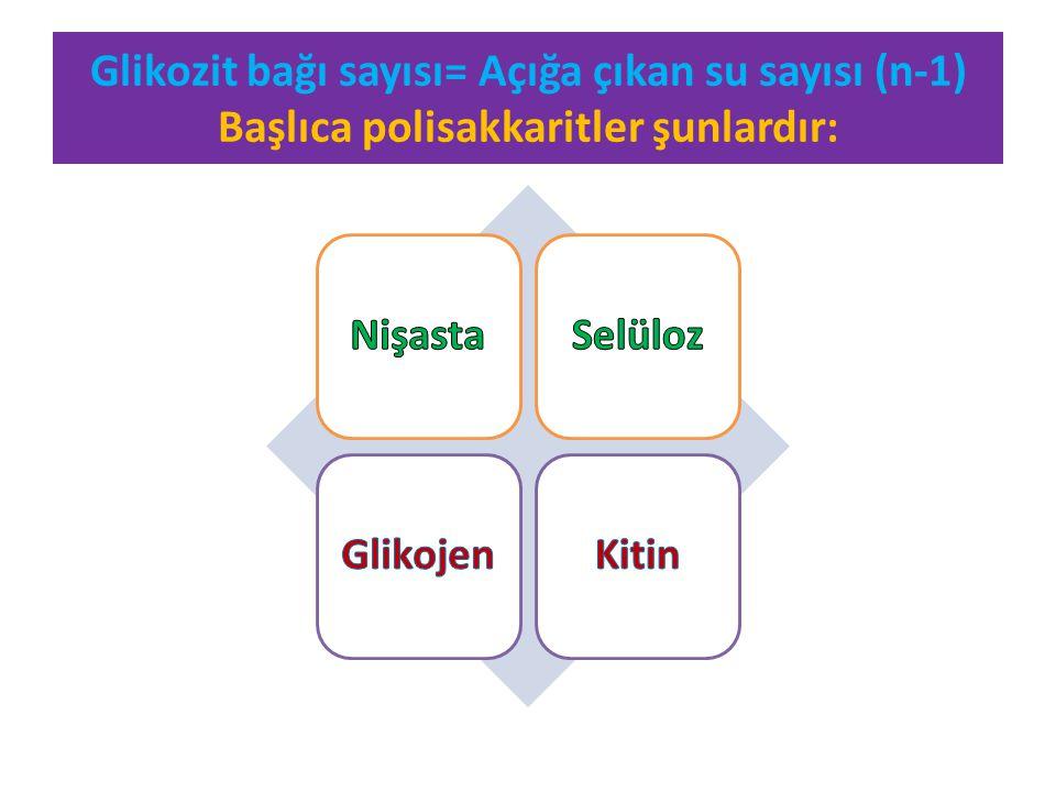 Glikozit bağı sayısı= Açığa çıkan su sayısı (n-1) Başlıca polisakkaritler şunlardır: