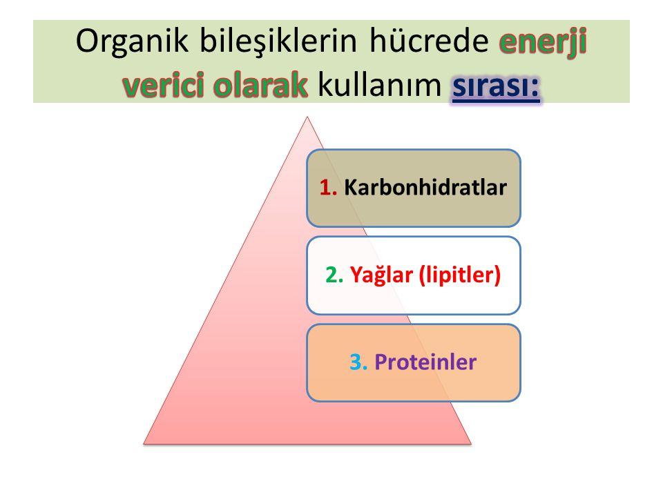 1. Karbonhidratlar2. Yağlar (lipitler)3. Proteinler