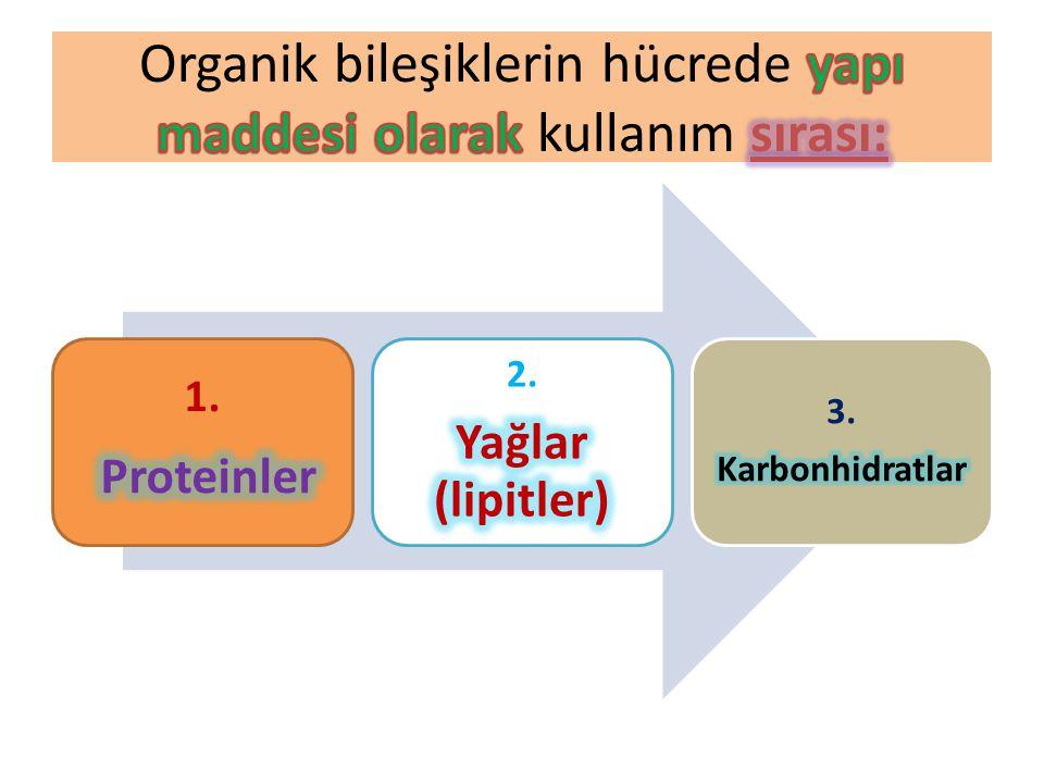 3. Karbonhidratlar