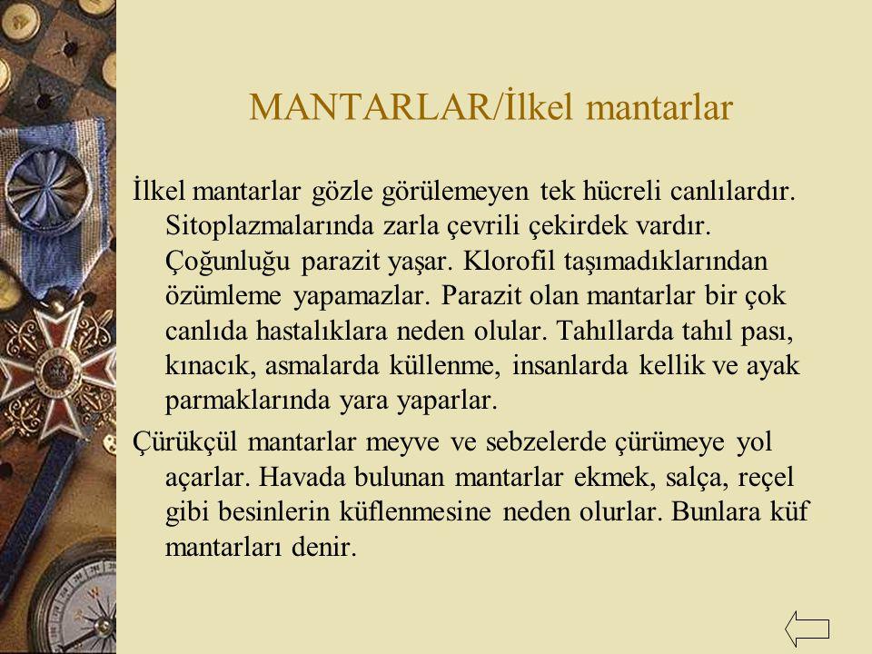 MANTARLAR/İlkel mantarlar İlkel mantarlar gözle görülemeyen tek hücreli canlılardır. Sitoplazmalarında zarla çevrili çekirdek vardır. Çoğunluğu parazi