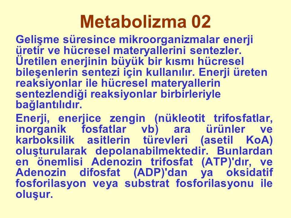 Metabolizma 02 Gelişme süresince mikroorganizmalar enerji üretir ve hücresel materyallerini sentezler. Üretilen enerjinin büyük bir kısmı hücresel bil