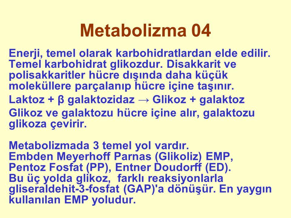 Metabolizma 04 Enerji, temel olarak karbohidratlardan elde edilir. Temel karbohidrat glikozdur. Disakkarit ve polisakkaritler hücre dışında daha küçük