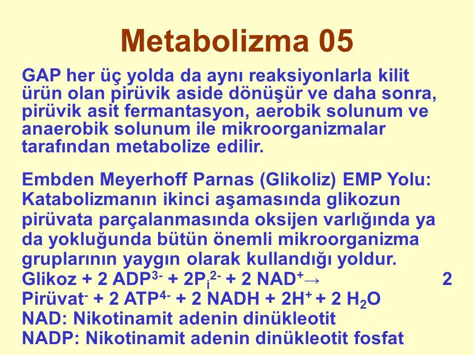 Metabolizma 05 GAP her üç yolda da aynı reaksiyonlarla kilit ürün olan pirüvik aside dönüşür ve daha sonra, pirüvik asit fermantasyon, aerobik solunum