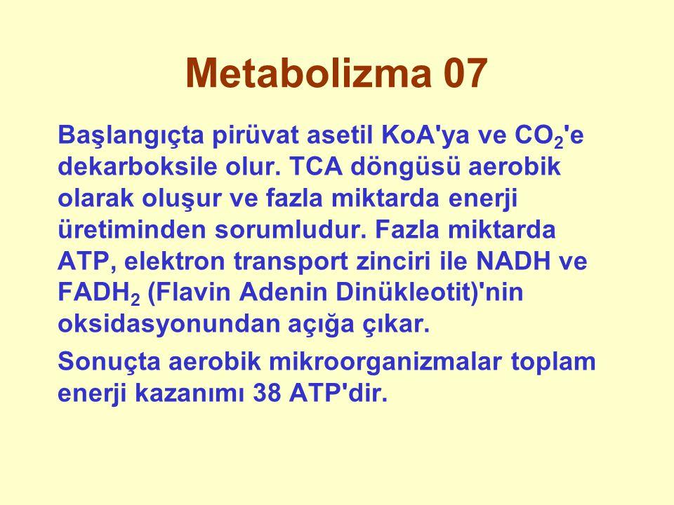 Metabolizma 07 Başlangıçta pirüvat asetil KoA'ya ve CO 2 'e dekarboksile olur. TCA döngüsü aerobik olarak oluşur ve fazla miktarda enerji üretiminden