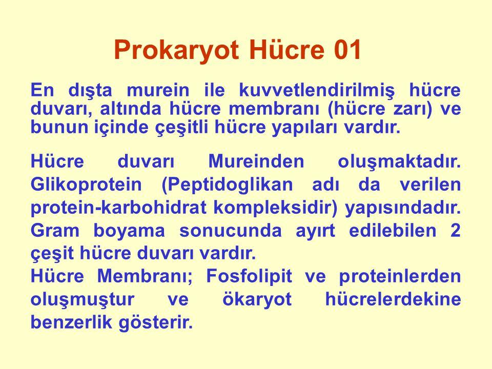 Metabolizma 04 Enerji, temel olarak karbohidratlardan elde edilir.