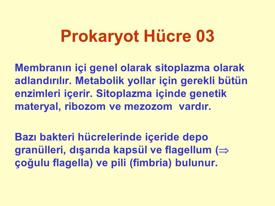 Prokaryot Hücre 03 Membranın içi genel olarak sitoplazma olarak adlandırılır. Metabolik yollar için gerekli bütün enzimleri içerir. Sitoplazma içinde