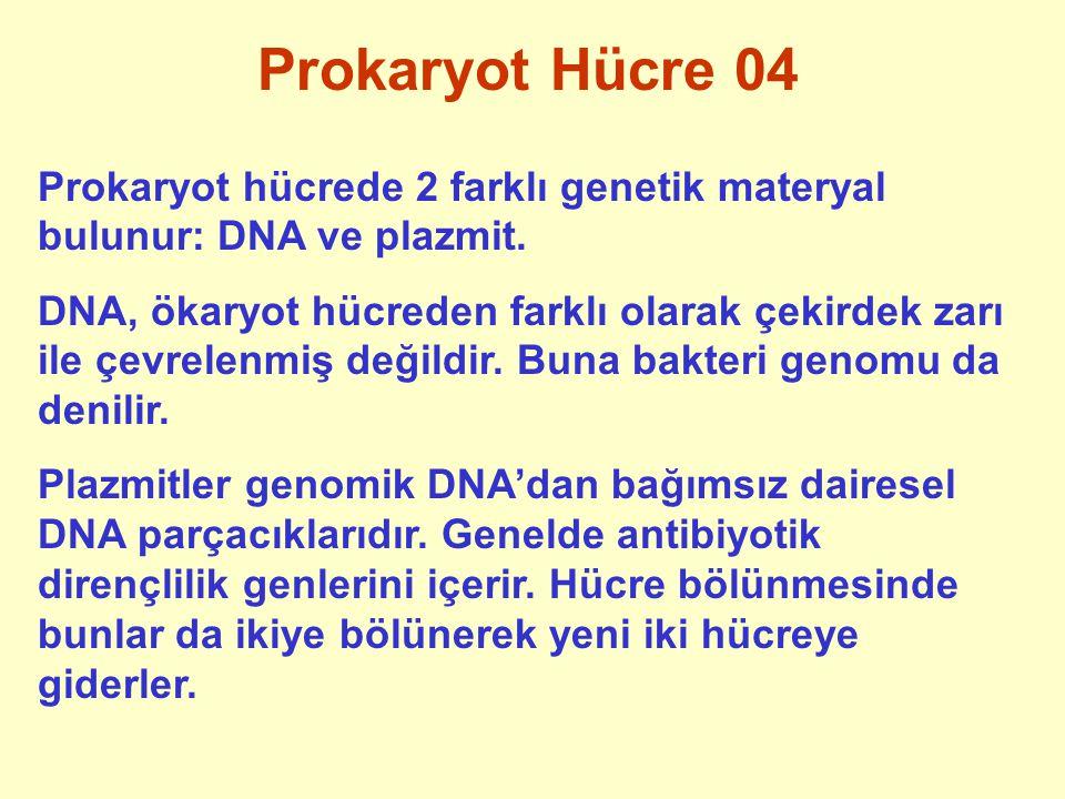 Prokaryot Hücre 04 Prokaryot hücrede 2 farklı genetik materyal bulunur: DNA ve plazmit. DNA, ökaryot hücreden farklı olarak çekirdek zarı ile çevrelen