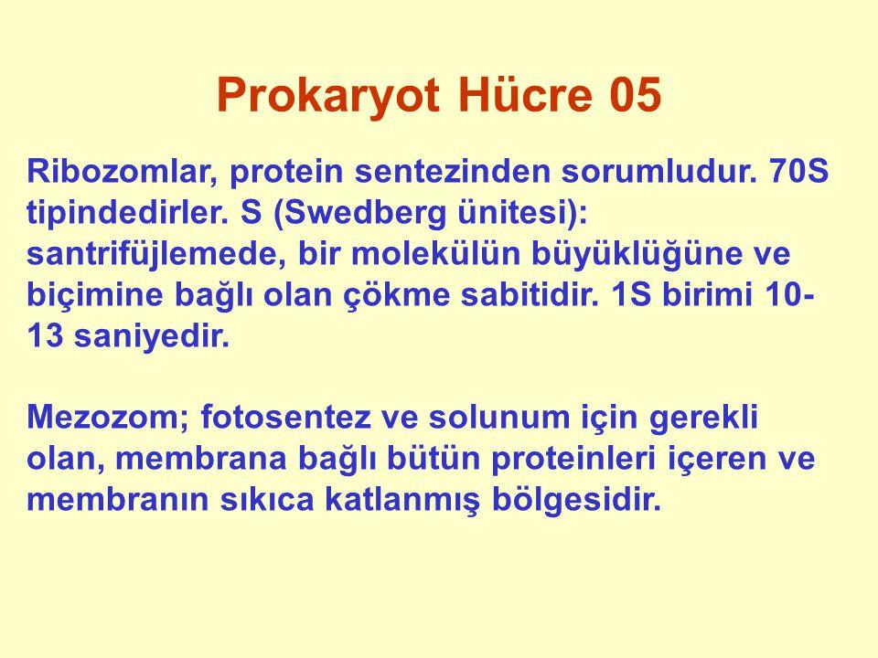 Prokaryot Hücre 05 Ribozomlar, protein sentezinden sorumludur. 70S tipindedirler. S (Swedberg ünitesi): santrifüjlemede, bir molekülün büyüklüğüne ve