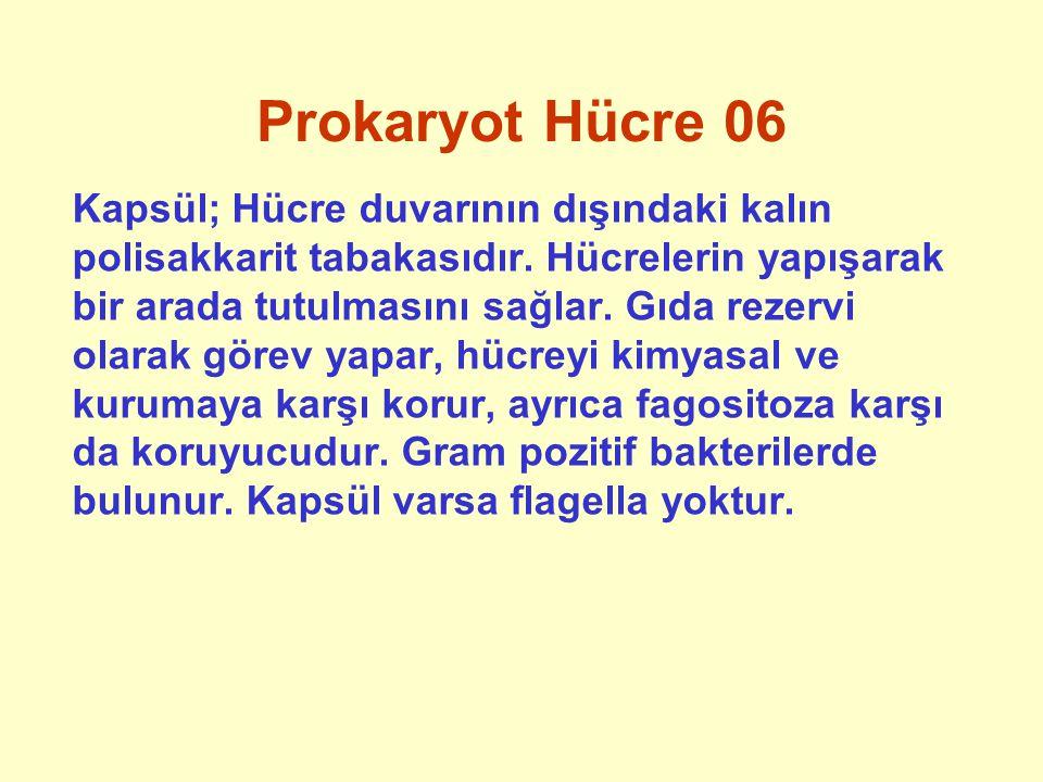 Prokaryot Hücre 07 Flagella; Hareket organelidir.