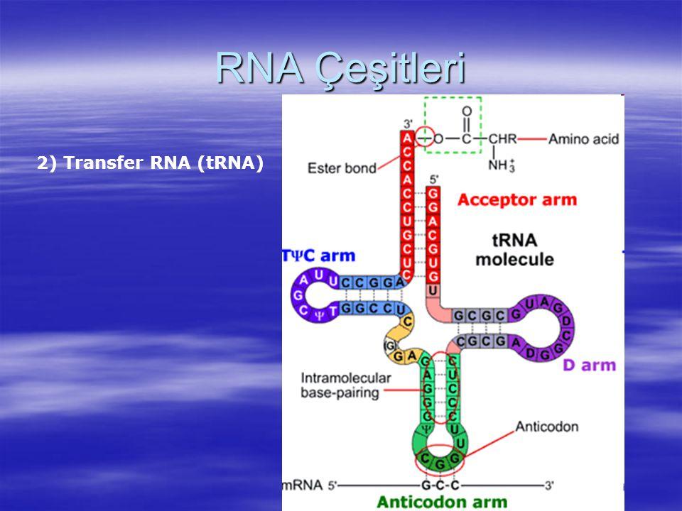 RNA Çeşitleri 2) Transfer RNA (tRNA)