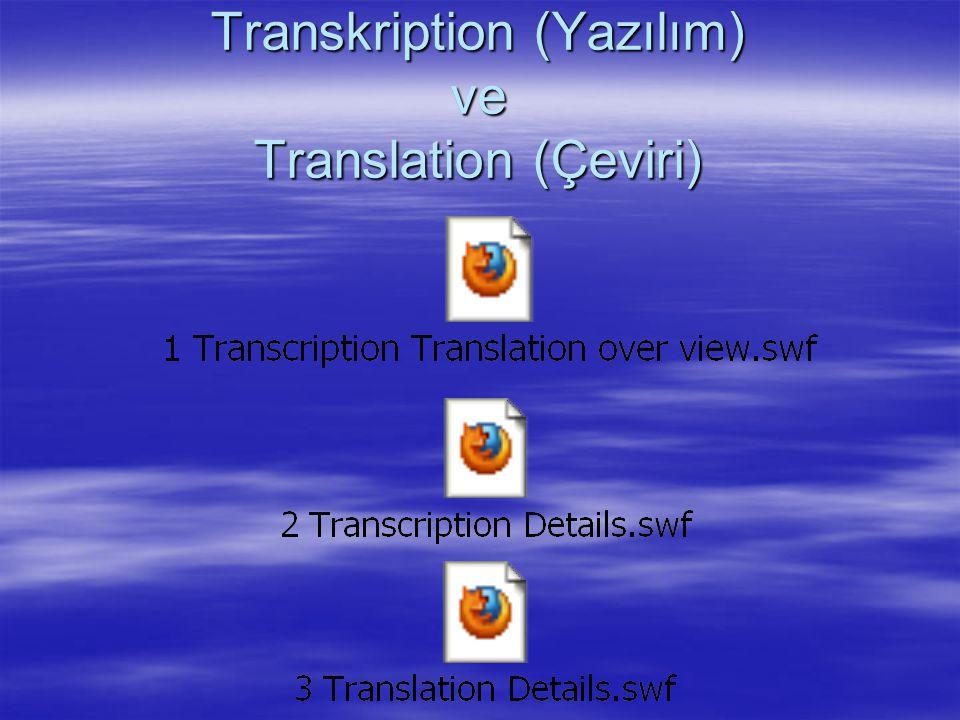Transkription (Yazılım) ve Translation (Çeviri)