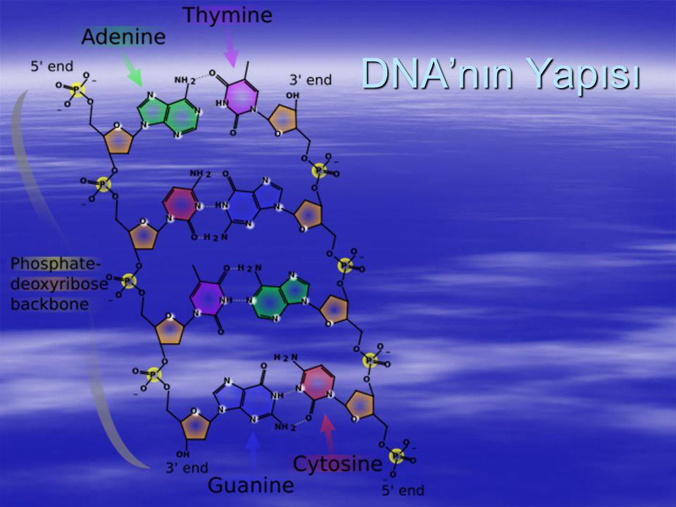 RNA Çeşitleri 3) Ribosomal RNA (rRNA)