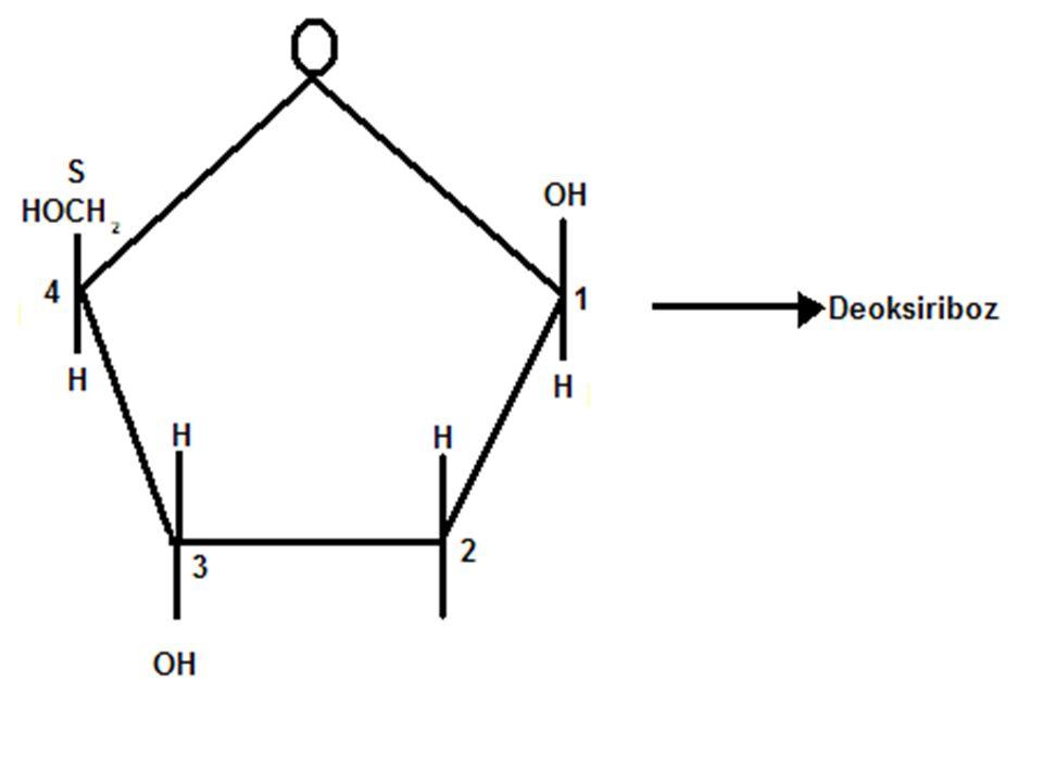 Deoksiriboz