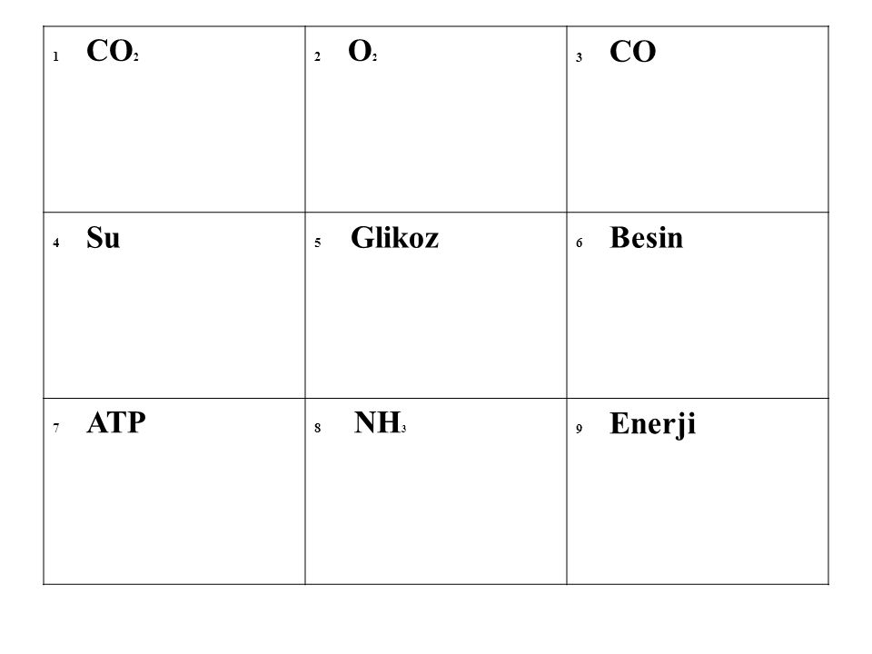 1 CO 2 2 O 2 3 CO 4 Su 5 Glikoz 6 Besin 7 ATP 8 NH 3 9 Enerji