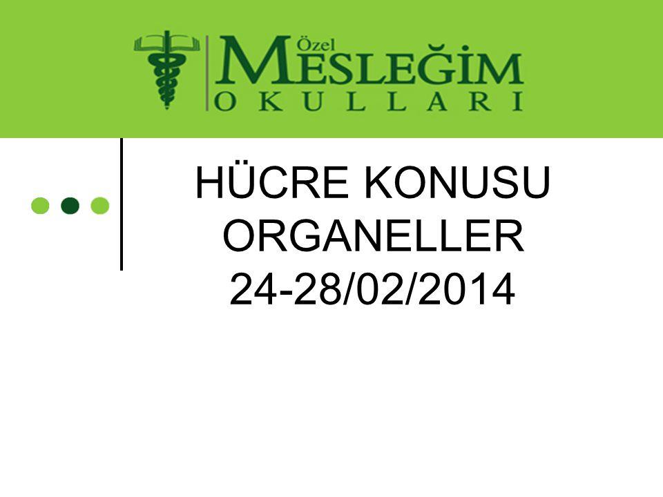 HÜCRE KONUSU ORGANELLER 24-28/02/2014