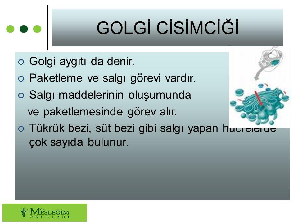 GOLGİ CİSİMCİĞİ ○ Golgi aygıtı da denir. ○ Paketleme ve salgı görevi vardır. ○ Salgı maddelerinin oluşumunda ve paketlemesinde görev alır. ○ Tükrük be