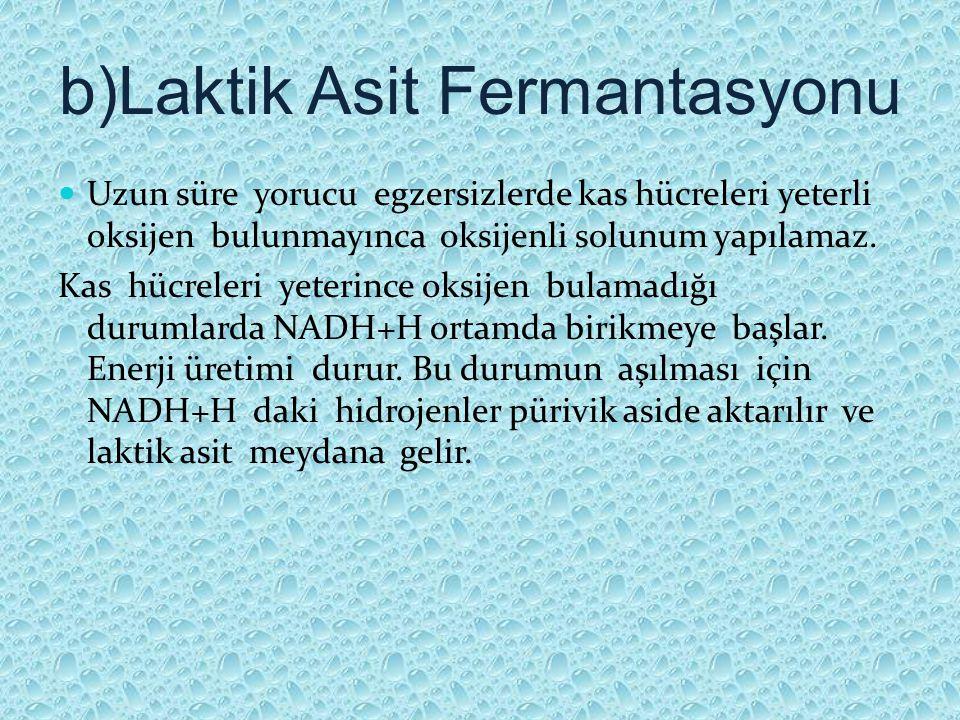 b)Laktik Asit Fermantasyonu Uzun süre yorucu egzersizlerde kas hücreleri yeterli oksijen bulunmayınca oksijenli solunum yapılamaz. Kas hücreleri yeter