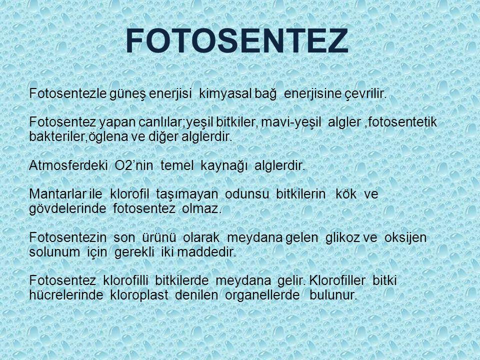 FOTOSENTEZ Fotosentezle güneş enerjisi kimyasal bağ enerjisine çevrilir.
