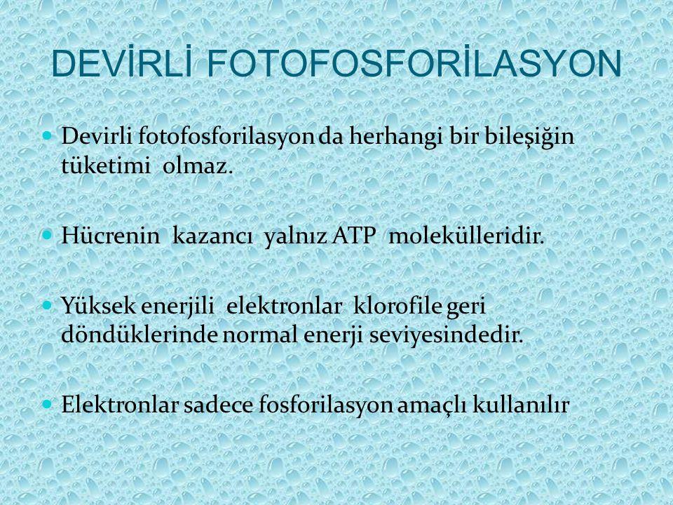 DEVİRLİ FOTOFOSFORİLASYON Devirli fotofosforilasyon da herhangi bir bileşiğin tüketimi olmaz. Hücrenin kazancı yalnız ATP molekülleridir. Yüksek enerj