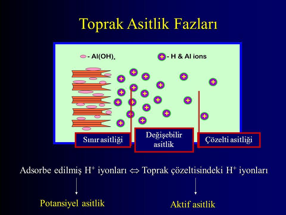 Toprak Asitlik Fazları Sınır asitliği Değişebilir asitlik Çözelti asitliği Adsorbe edilmiş H + iyonları  Toprak çözeltisindeki H + iyonları Potansiyel asitlik Aktif asitlik