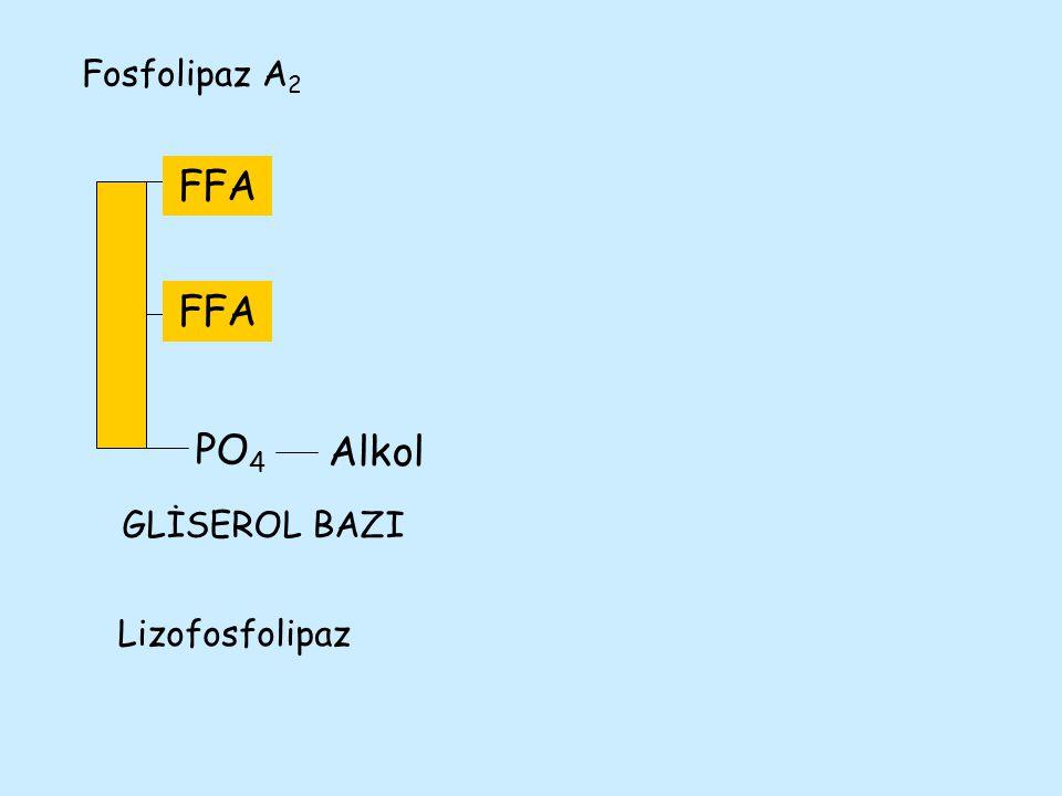 FA PO 4 Alkol Fosfolipaz A 2 FFA Lizofosfolipaz FFA GLİSEROL BAZI
