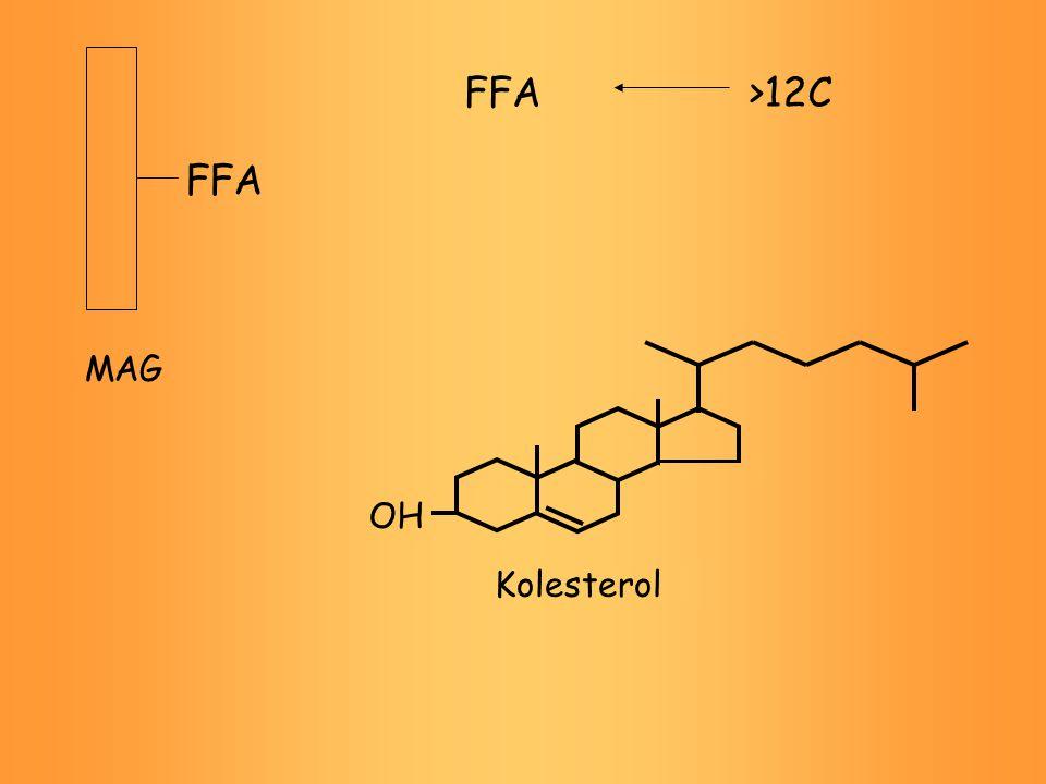 FFA MAG FFA OH Kolesterol >12C