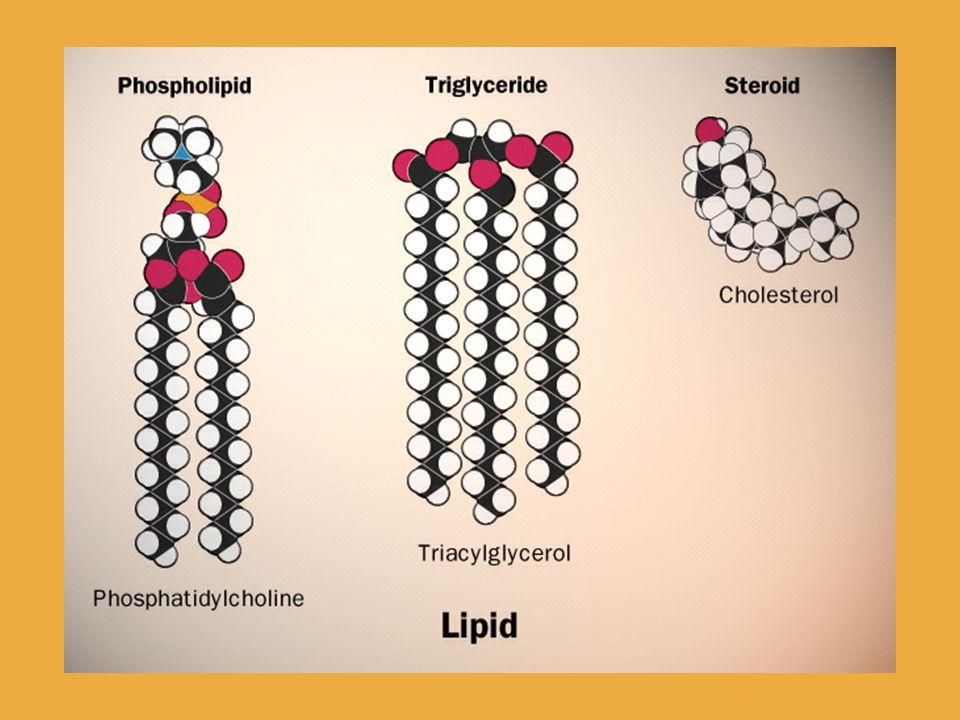 Yağ asidlerinin  -  oksidasyonu: Yağ asidi oksidasyonunda nicel olarak en aktif yol mitokondriyal  -oksidasyondur.