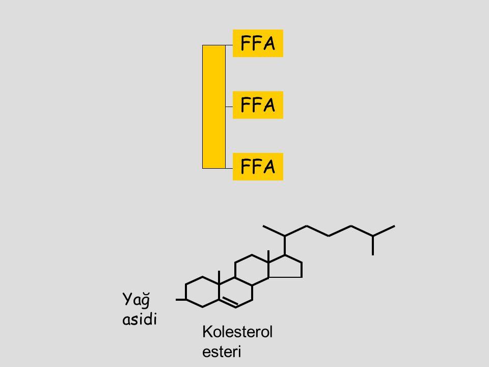 Yağ asidi Kolesterol esteri FFA