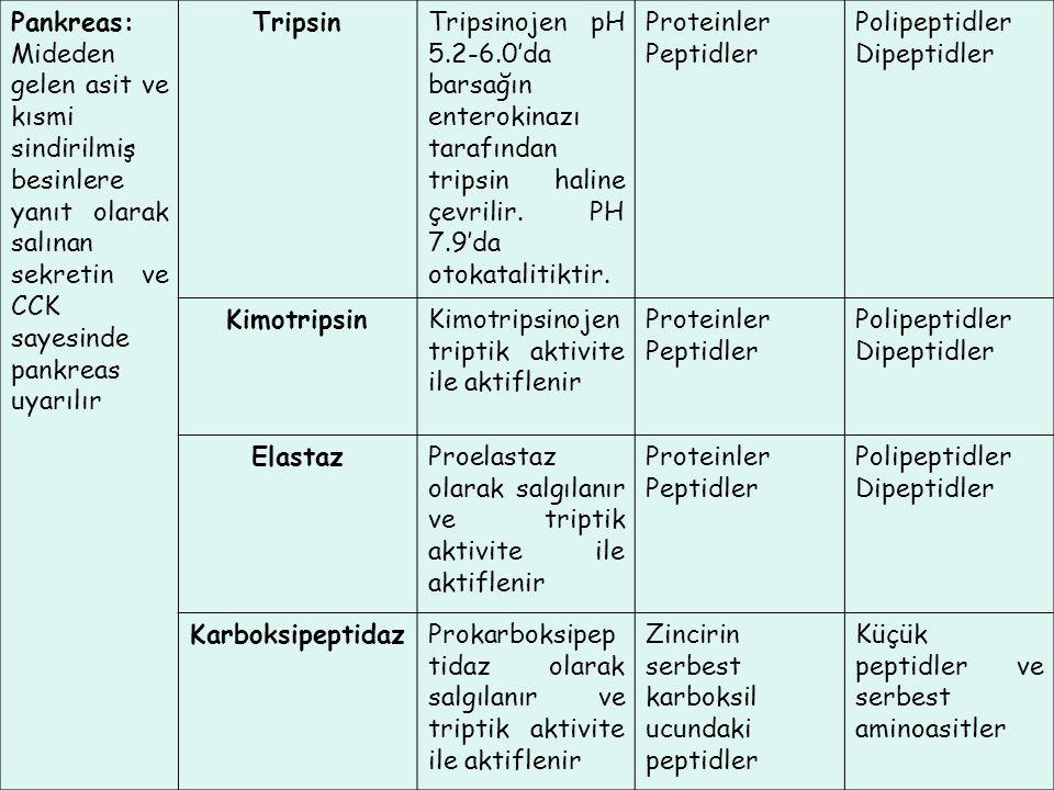 Pankreas: Mideden gelen asit ve kısmi sindirilmiş besinlere yanıt olarak salınan sekretin ve CCK sayesinde pankreas uyarılır TripsinTripsinojen pH 5.2